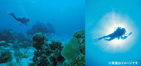 diving002.jpg